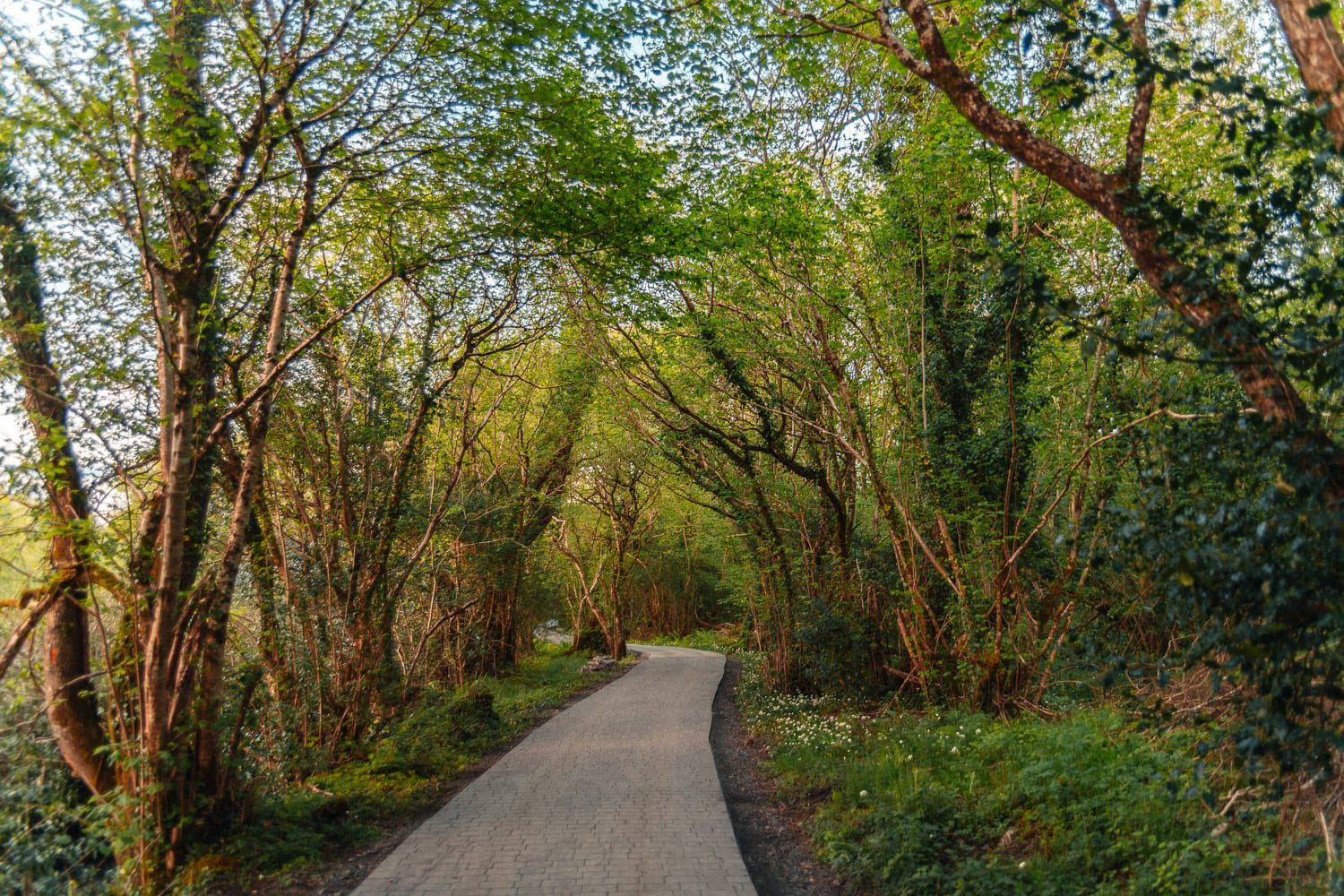 Gorgeous forest pathway to Finn Lough Resort's Bubble Domes