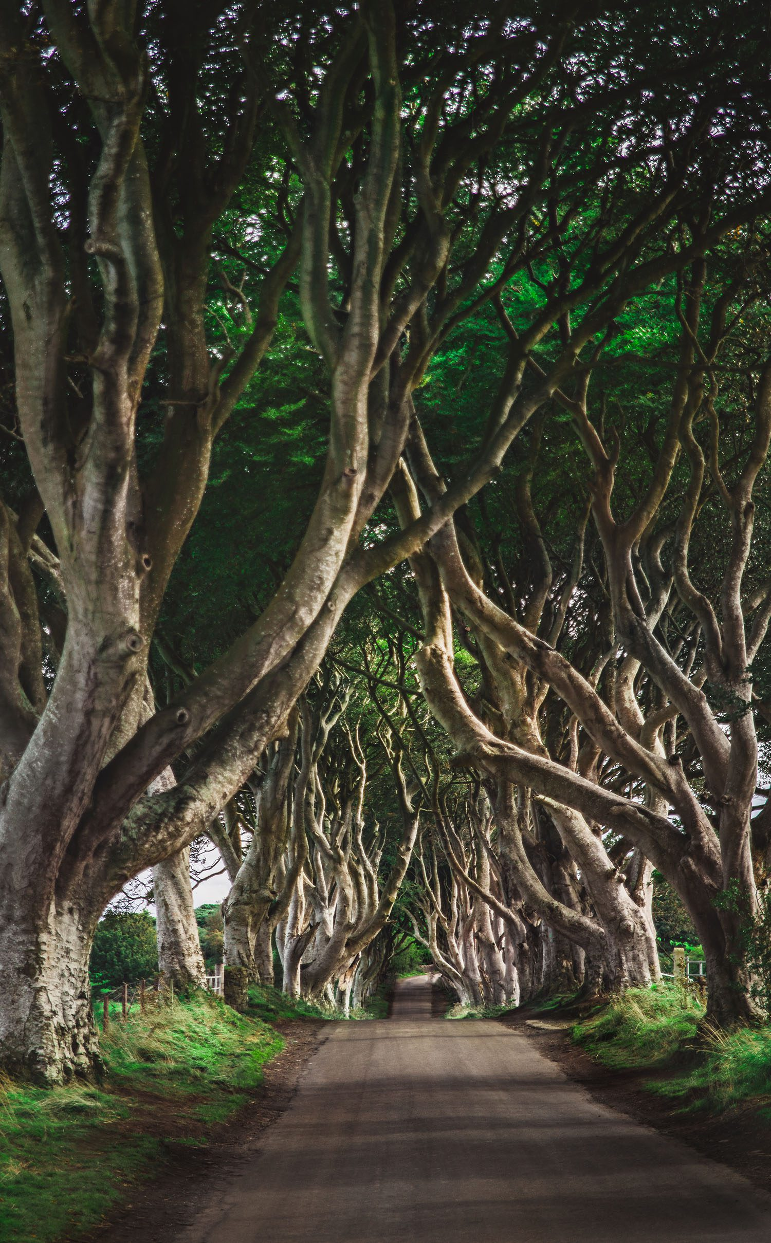 The Stunning The Dark Hedges - Game of Thrones Location in Northern Ireland