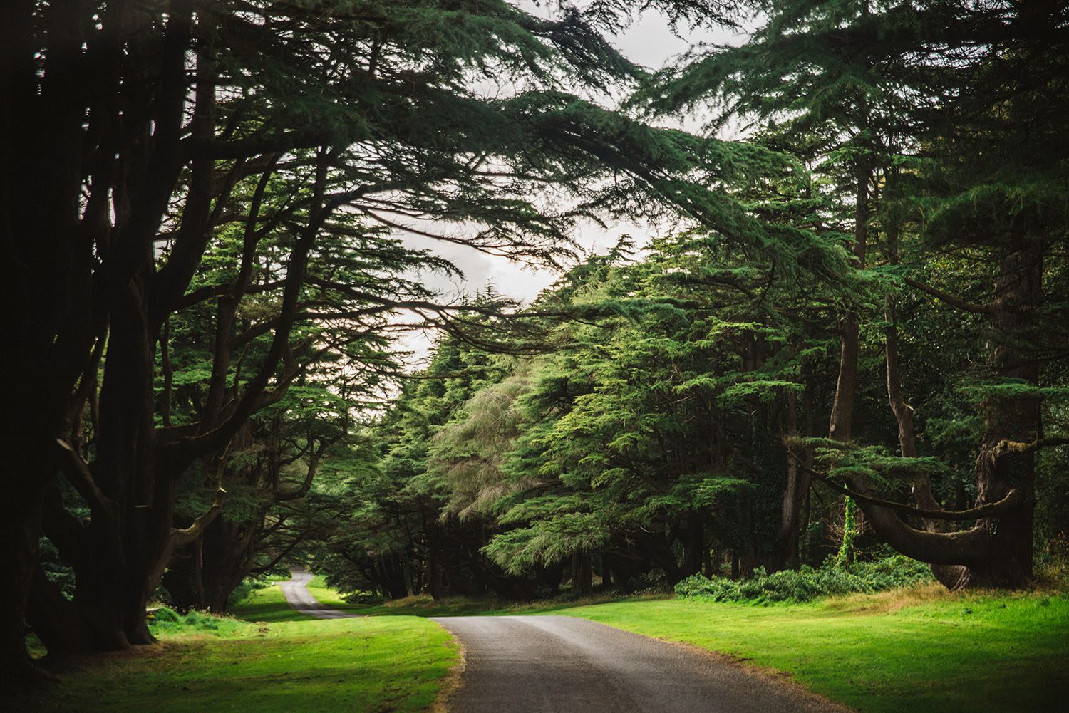Tollymore Forest Park - Game of Thrones Filming Location in Northern Ireland