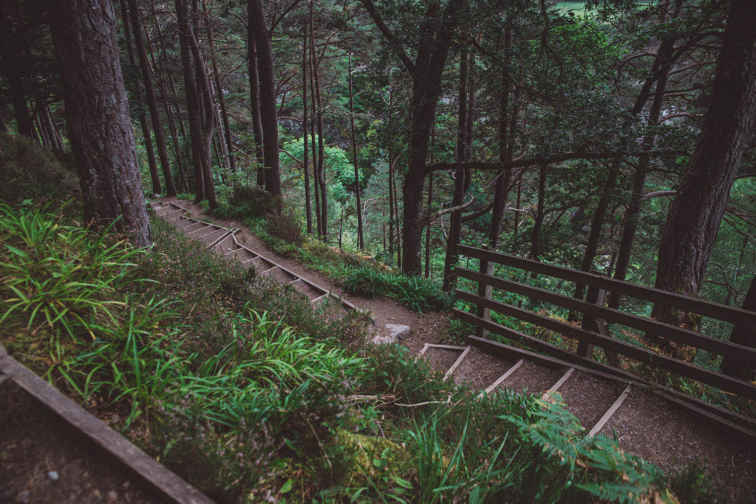 Path with stairs in Scottish wood